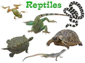 imagenes de animales reptiles webquest creator 2