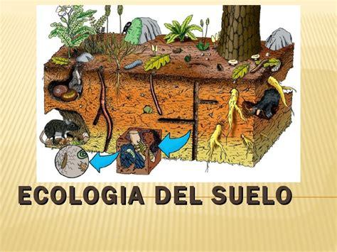 cadena alimenticia unam ecolog 237 a de suelos
