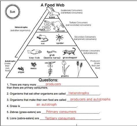 food chains and food webs worksheets for third grade