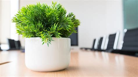 office plants  fit   desk small business trends