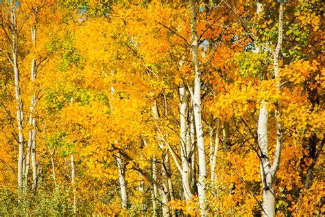seasons autumn trees birch nature wallpaper 3872x2582 171783 wallpaperup