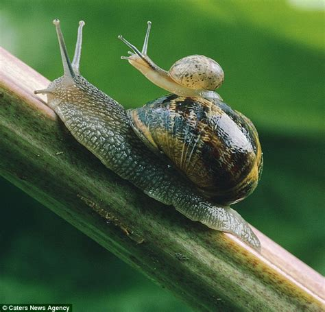 when does the mail come to my house how i found the secret of stopping snails munching your garden but i fell in love