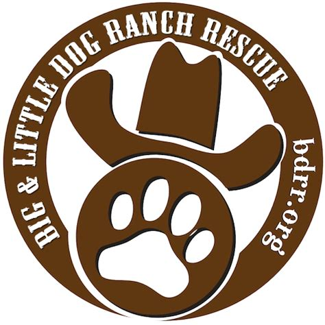 big ranch rescue shelter spotlight big ranch rescue 1 800 petmeds cares