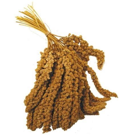 millet sprays 1kg at burnhills