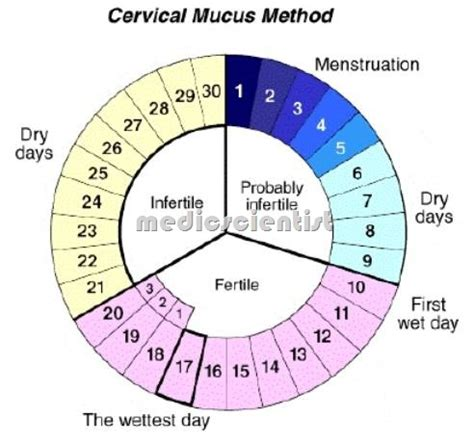 Contraception Techniques From Back In The Day by Contraceptives Contraceptives Rhythm Method And