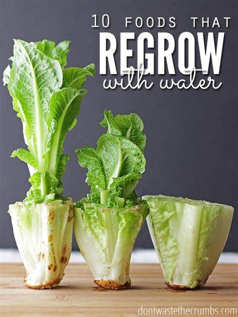 regrow food  water  foods  regrow  dirt