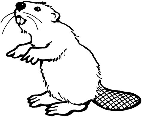 beaver color free beaver coloring pages