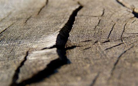 Wooden Garden Art - holz macro hintergrundbilder holz macro frei fotos