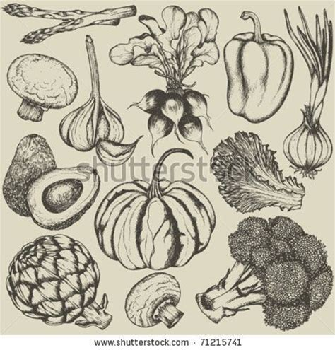 Drawing Vegetables by Set Vegetables Stock Vector 71215741