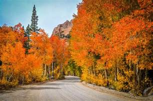 fall colors in california bishop bursting with fall colors a peek of them at