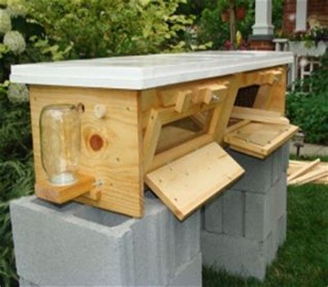 top bar beehive kits deluxe large hive starter kit special 490 for a limited