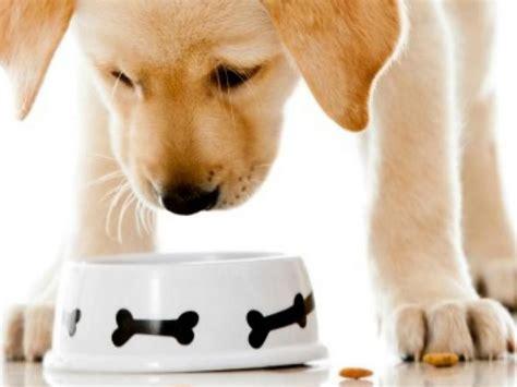 alimenti che i cani non possono mangiare cani 8 cibi per umani che possono mangiare tranquillamente