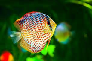 Golden Eye View: Top 15 Most Beautiful Fishes of the World according
