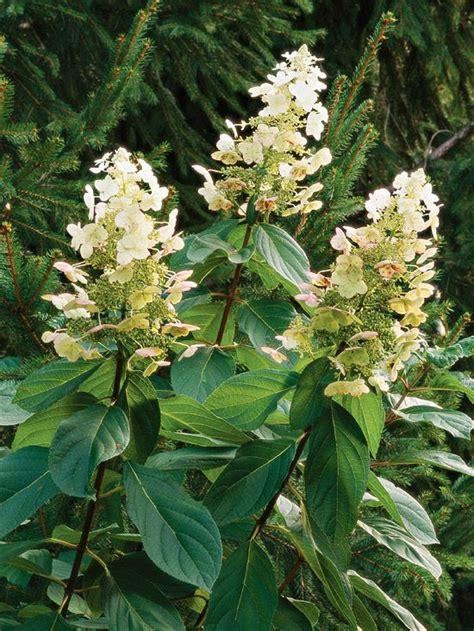 best flowering shrubs best flowering trees and shrubs