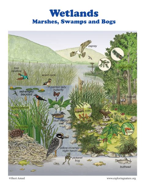 marshes swamps  bogs
