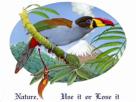 Birds Of Bangladesh Essay by Birds Of Bangladesh Essay Writer