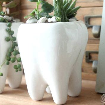 tooth shaped planter white ceramic plant pot pen holder cute from amazon my home