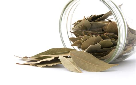 Pantry Moths Bay Leaves by Tips To Prevent Common Pantry Pests Moths Pestworld