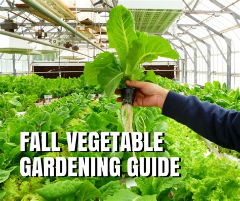 Fall Vegetable Gardening Guide For Texas Vegetable Garden Planting