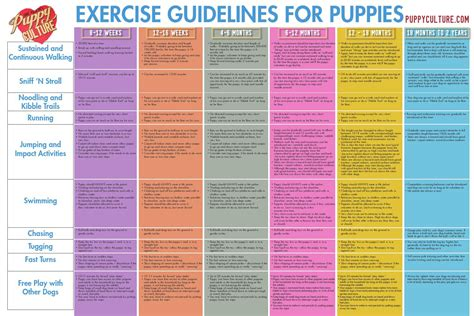 puppy culture puppy culture exercise poster by madcap productions issuu