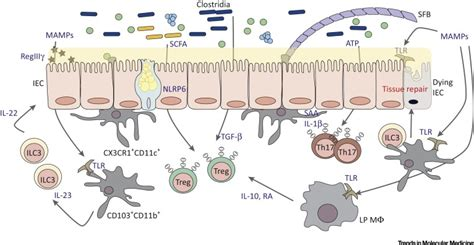 Peek Me Naturals Anti Allergy antibiotic induced changes in the intestinal microbiota