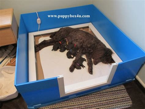 whelping puppies whelping box puppy box puppy birth whelping puppy delivery