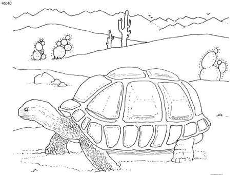 desert animals for kids coloring pages coloring pages