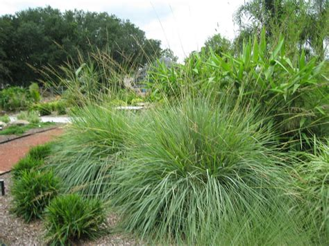 how to grow ornamental grasses urbangardening