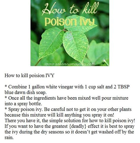 25 best ideas about kill poison ivy on pinterest poison ivy soap poison ivy killer and