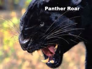 Jaguar Roar Sound Effect Panther Roar Sound Effect