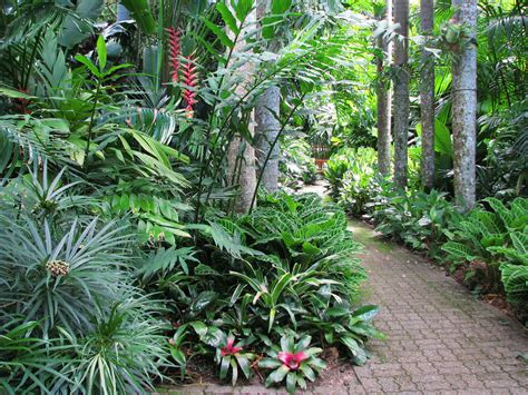 Cairns Botanical Garden Friends Of Botanic Gardens Cairns Cairns Tourism Town Find Book Authentic Experiences In