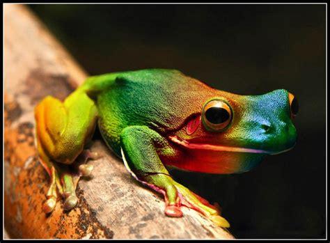 imagenes de animales uñas 10 самых странных лягушек в мире