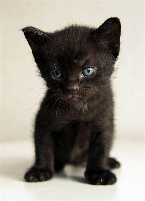 imagenes tiernas gatitos bebes gatitos bebes en tiernas imagenes para descargar