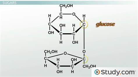 carbohydrates quiz pdf chemistry of carbohydrates worksheet bluegreenish