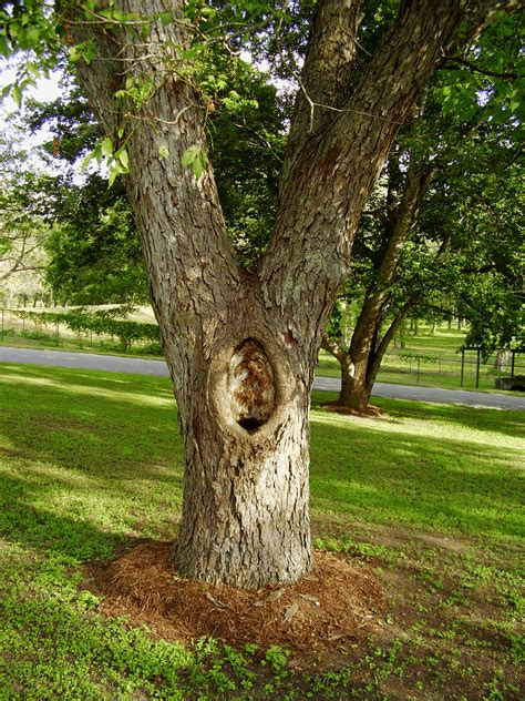 what is a tree trunk covered with 4 letters patching tree fixing a tree with a hollow trunk or