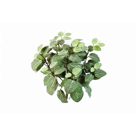 Bromelia De Luxe by Planten En Struiken Flora Facto
