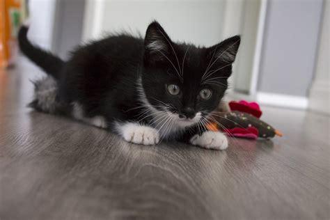 gatti in casa giochi per gatti fai da te come divertirsi in casa dogalize