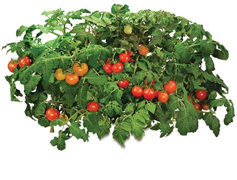 How To Grow Indoor Garden - home indoor gardening month