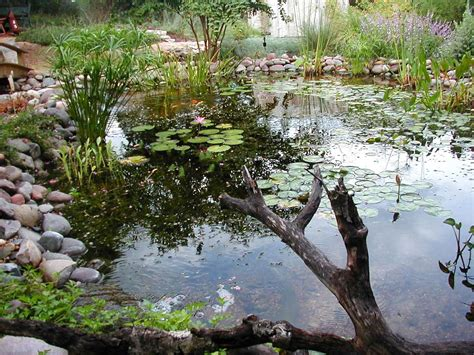 is a backyard pond an ecosystem hometalk backyard ponds are truly the jewel of the water