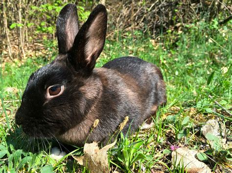 new year rabbit facts 30 interesting facts about rabbits rabbitcagesuk