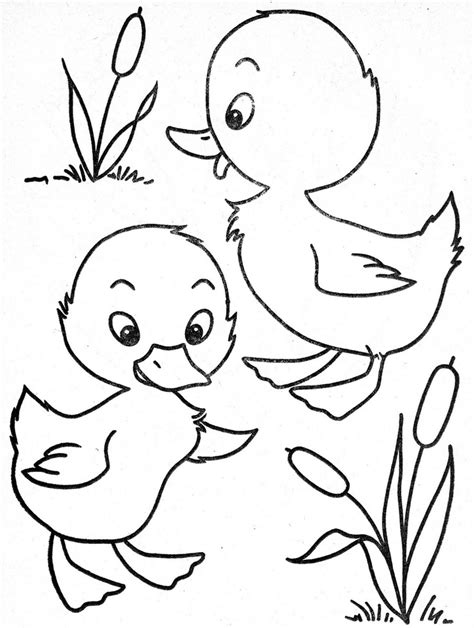coloring pages of ducks in a pond 529 best images about easter colouring pages on pinterest