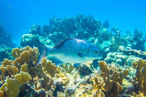 dive roatan your guide to roatan scuba diving trip sense