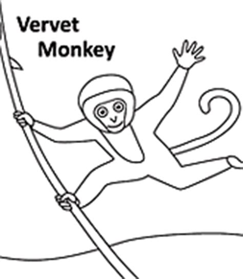 vervet monkey coloring page animal coloring pages kids word search puzzles