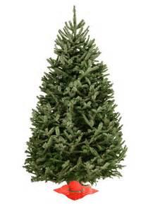 wholesale balsam fir christmas trees valfei