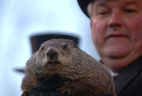 groundhog day meaning of like groundhog day the misuse of a new cliche