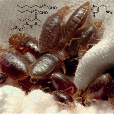 what chemical kills bed bugs building a better bed bug trap wired
