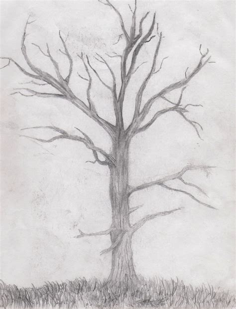 drawn tree dead tree pencil and in color drawn tree dead