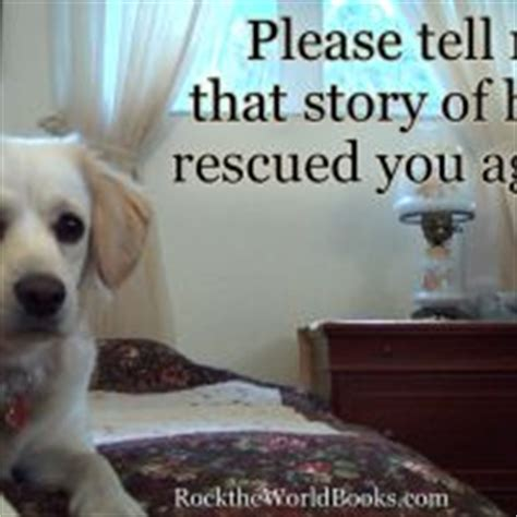 q the story of an underdog books 1000 images about rescue me on quotes