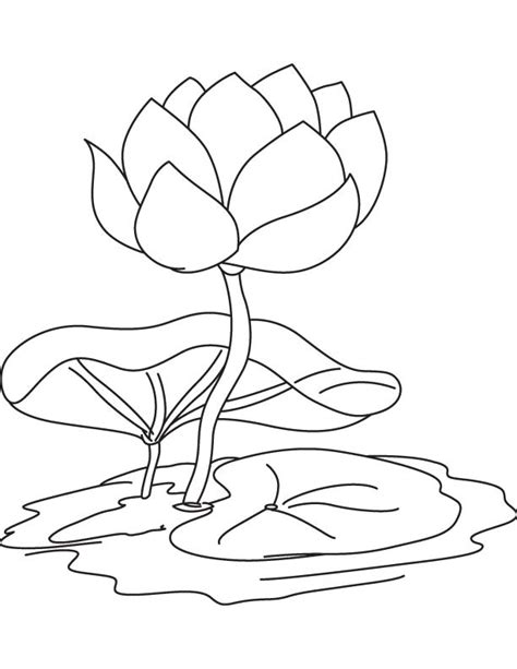 Lily Pad Flower Coloring Pages Coloring Home Pad Coloring Page Catrak