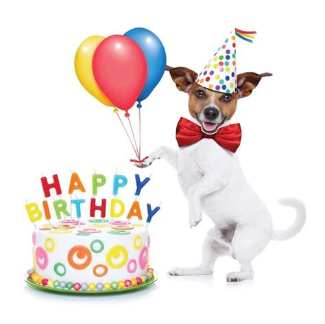 dog themed birthday ecards details about happy birthday card jack russell puppy dog